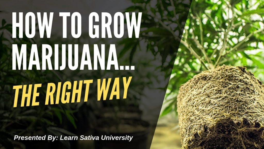 How to Grow Marijuana (Step-By-Step) Week One