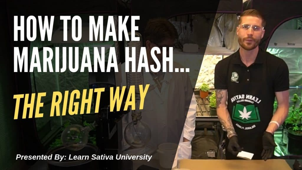 How to Make Marijuana Hash (Step-By-Step)